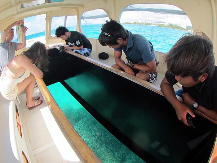 前往探索鯨鯊吧!亦可結合藍色洞窟與滑翔傘等其他行程。