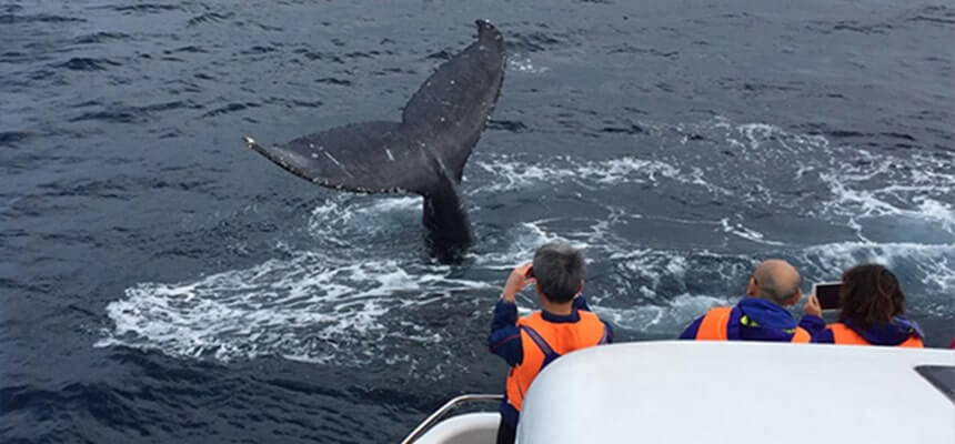 Winter Special! Enjoy Whale Watching at Okinawa