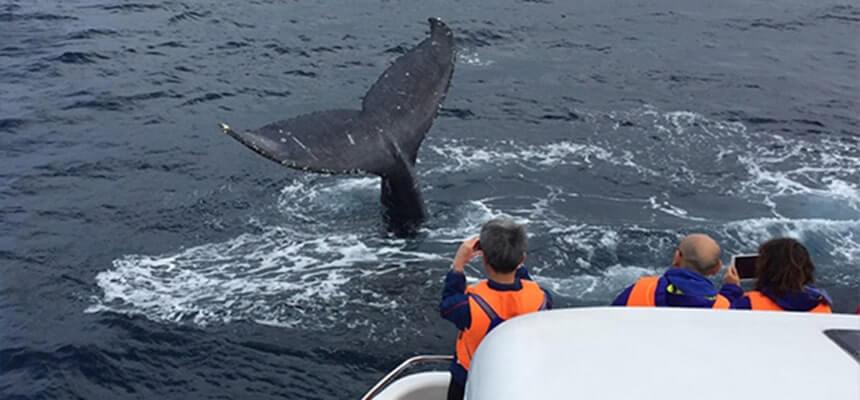 冬季限定!到沖繩享受賞鯨樂趣