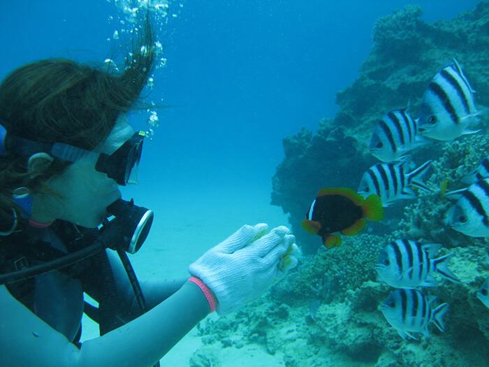 透明度は抜群の海に潜ればたちまち熱帯魚と出会える
