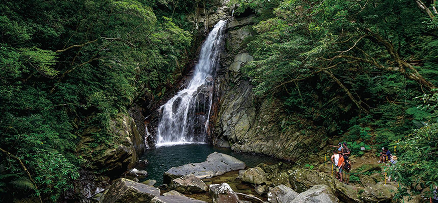 體驗亞熱帶的大自然!感受沖繩野外健行與眾不同的魅力