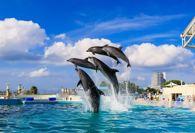 海洋博公園・海豚劇場