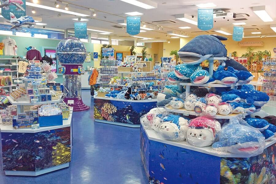 OkinawaChuraumi Aquarium Antenashop Umichurara
