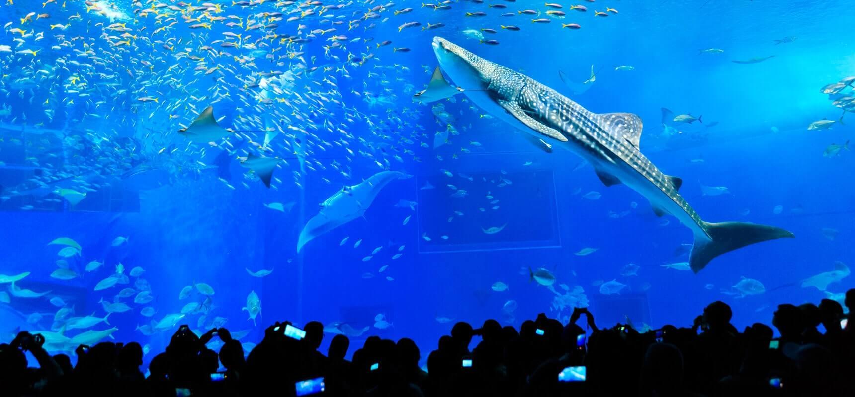 緊緊抓住小朋友的心!沖繩美麗海水族館攻略法