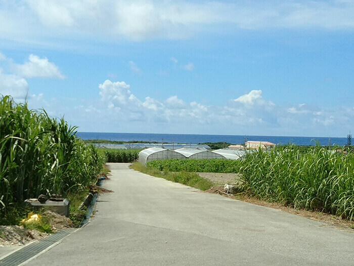 「糸滿House」是日本最南端的草莓農園,從農園附近可以看到最棒的海景。