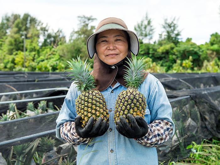 沖繩縣的自有品種「黃金鳳梨」是所有鳳梨品種裡最難培育且要花3年時間才能收成,在國產鳳梨中屬稀有品種。