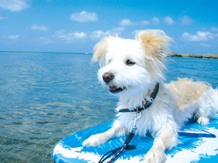 ゆったり・のんびり宮古島の海を堪能
