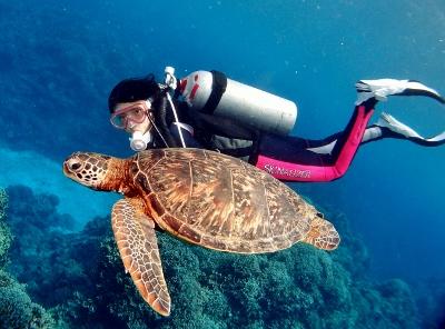 ウミガメウォッチングツアー 幸せを運ぶと言われる野生のウミガメに会いに行くツアー