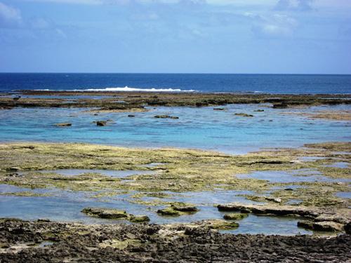たくさんできる潮だまり 干潮になるといくつもの潮だまりができあがります。一つ一つまわりながら生き物を探しましょう。