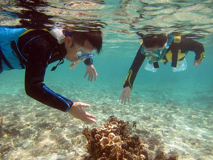 サンゴって深いところにいるんじゃないんですか? サンゴは浅場でも多くみられます。すぐ目の前にいるので、たっぷり観察できます。