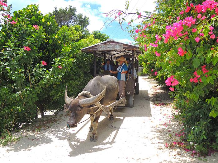 竹富観光には水牛車、ランチ、レンタサイクルが含まれる