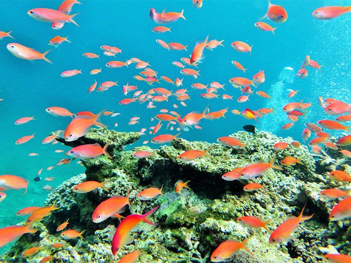 石垣島の海はカラフルな魚たちがいっぱい