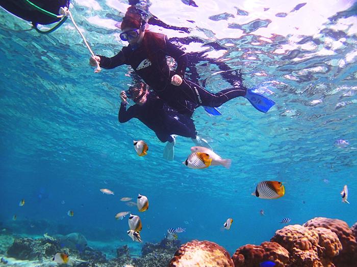 南国ホワイトビーチでシュノーケル  熱帯魚がいっぱいのビーチはまさに南国!