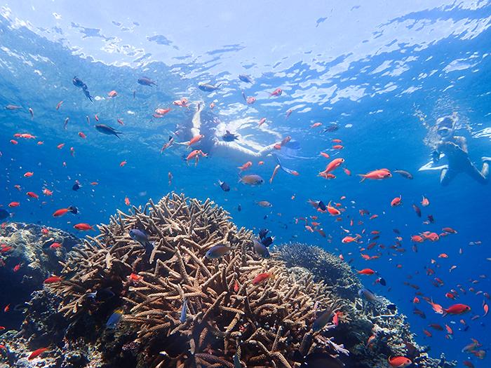色鮮やかな熱帯魚たちが出迎えてくれる