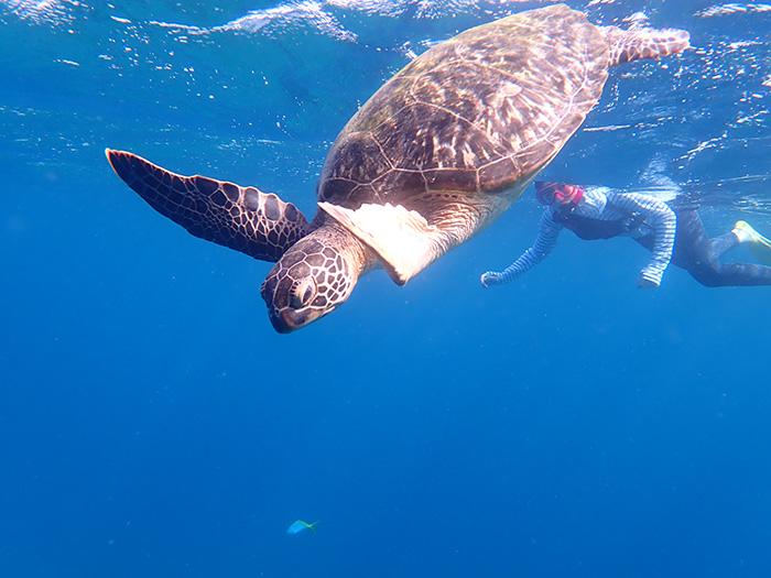 目の前にウミガメが泳いで来てくれることも!!