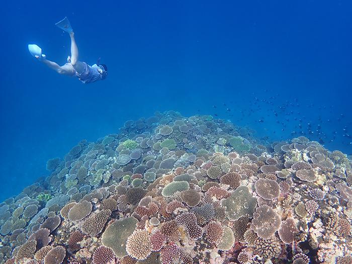 石垣島トップクラスの珊瑚礁!!