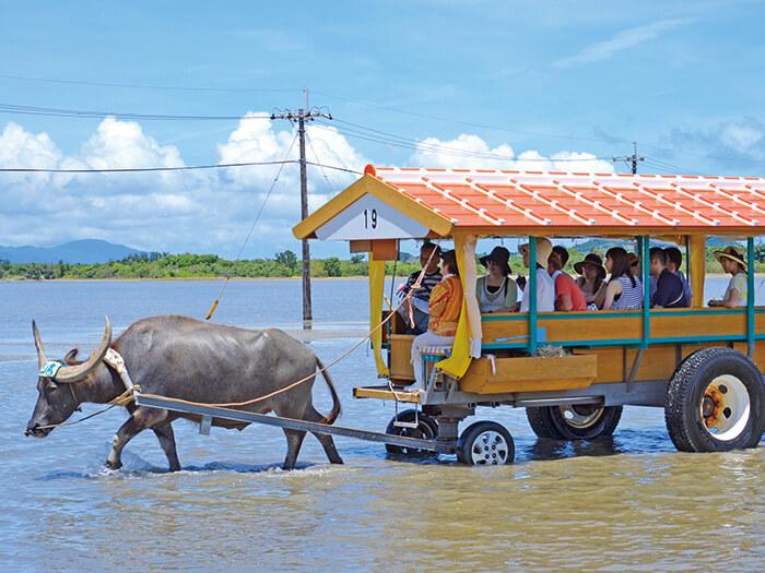 人気の由布島水牛車観光がセットになったお得プランも
