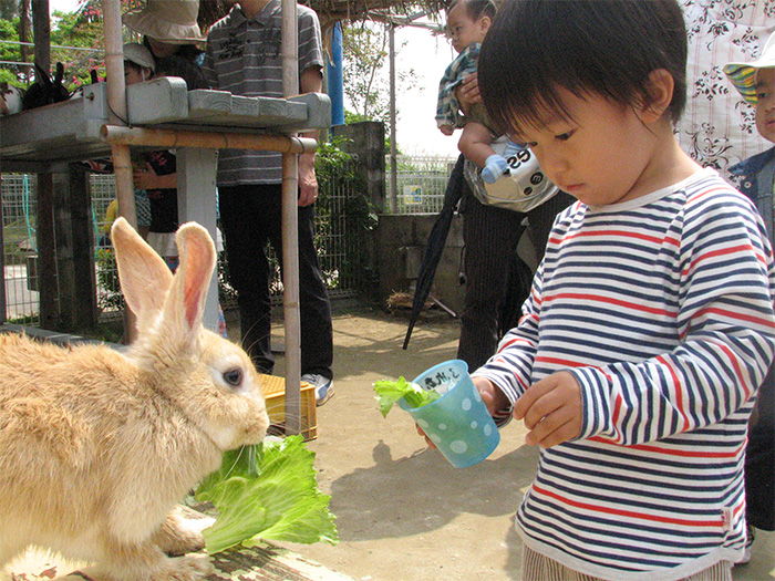 可以接觸到兔子、天竺鼠等小動物的「親近小動物廣場」。