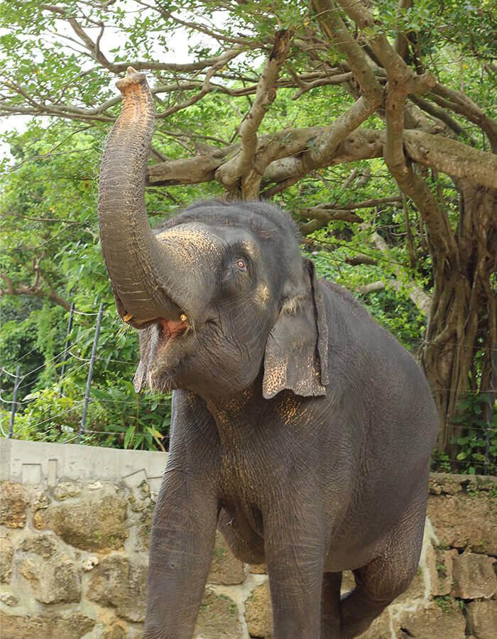 園區不定期舉辦大象「琉花」的餵食體驗活動,敬請洽詢詳細活動內容。