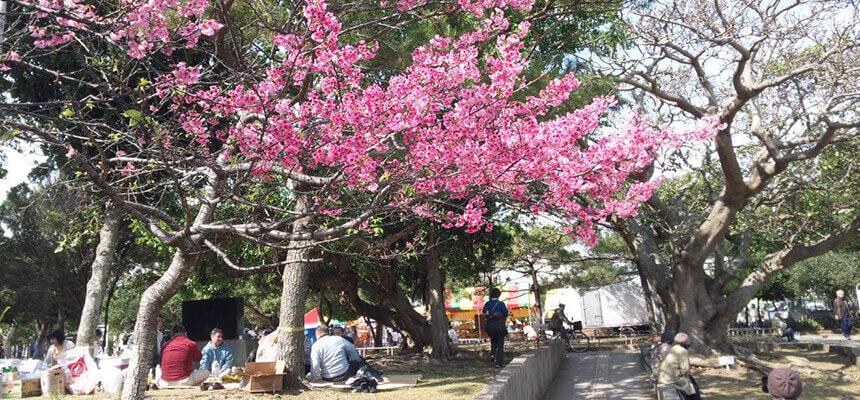 沖縄-2月のおすすめイベント4選