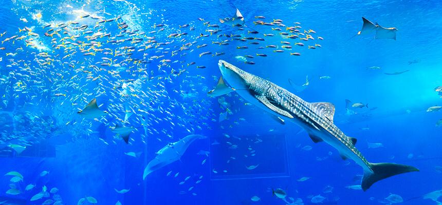 キッズのハートわしづかみ!沖縄美ら海水族館攻略法